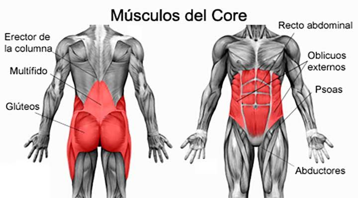 musculos-del-core.jpg